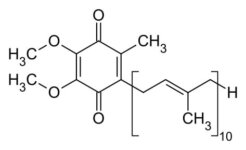 What Does Coenzyme Q10 (Ubiquinone) Do in Skincare?