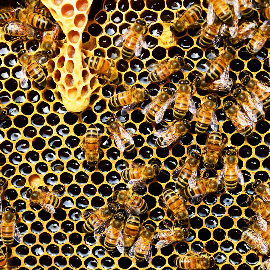 All About Bee Venom and Honey in Skincare