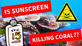 Is Your Sunscreen Killing Coral Reefs? The Science (with Video)