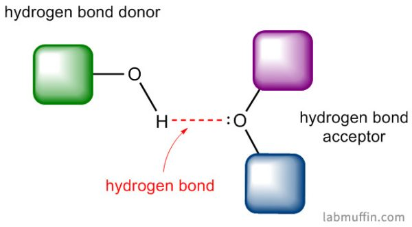 Hydrogen bonding donor and acceptor