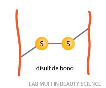 disulfide bond bridge