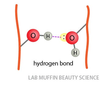 Hair frizz science: water and hydrogen bonds