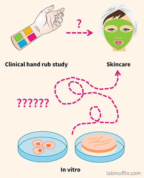 in vitro vs clinical results: applicability to skincare