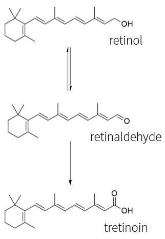 Retinol metabolism